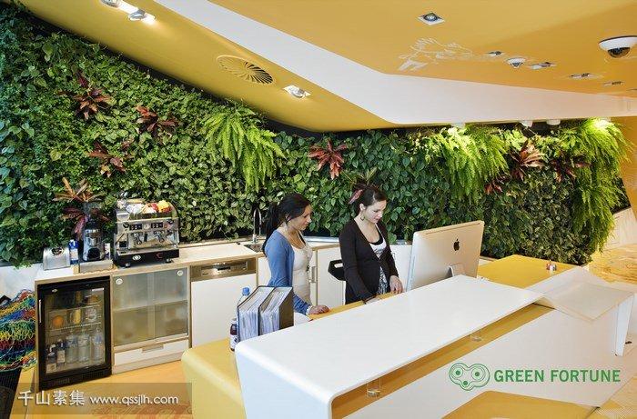 牙医诊所植物墙