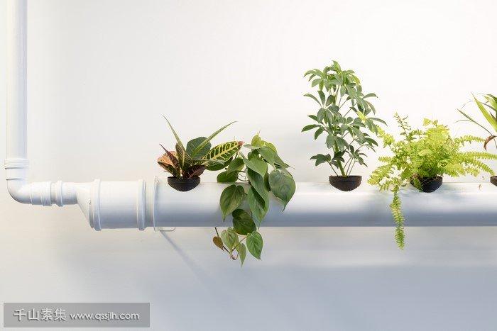 办公室垂直绿化
