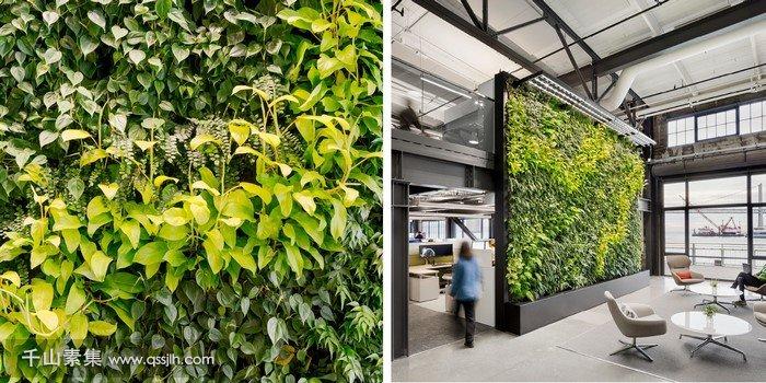 公室垂直绿化