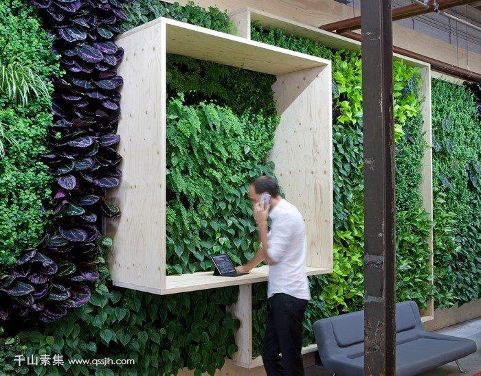 棚屋中的垂直花园