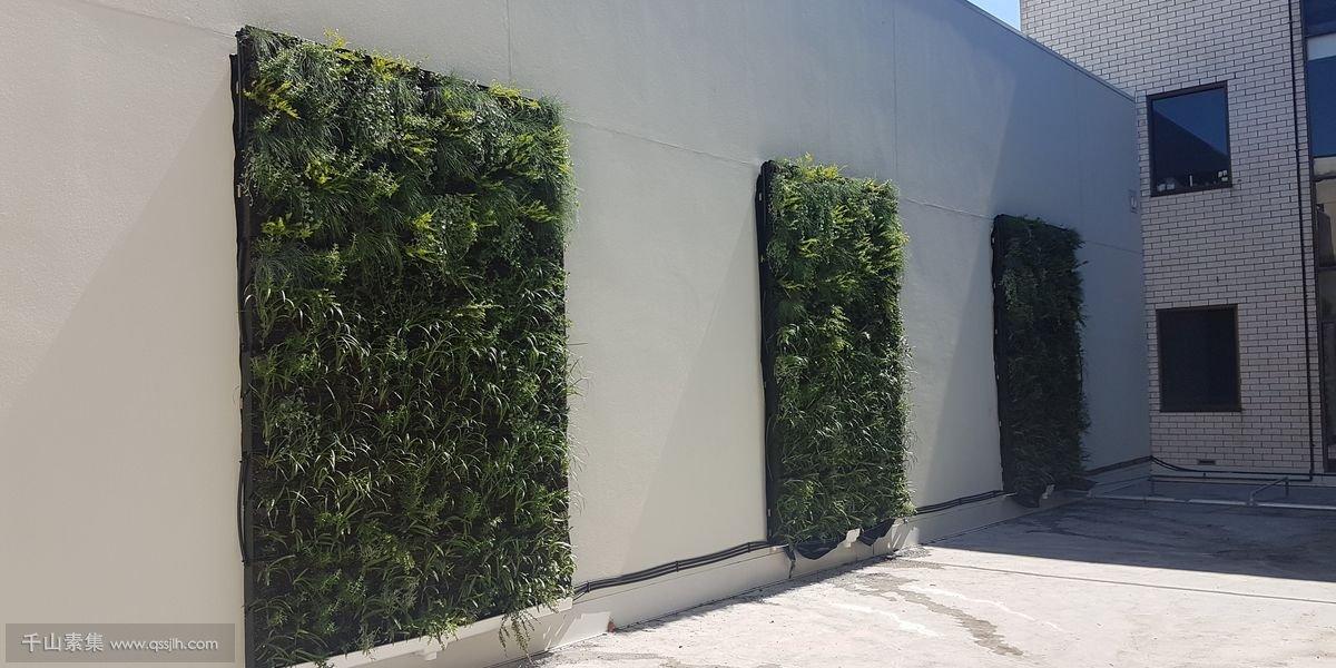 庭院植物墙