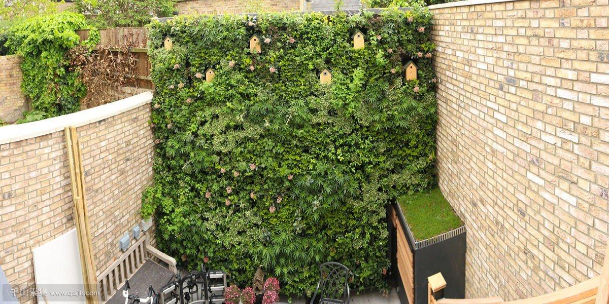 后院花园植物墙