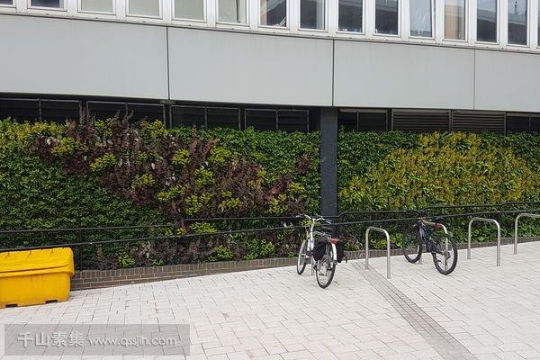 停车场植物墙