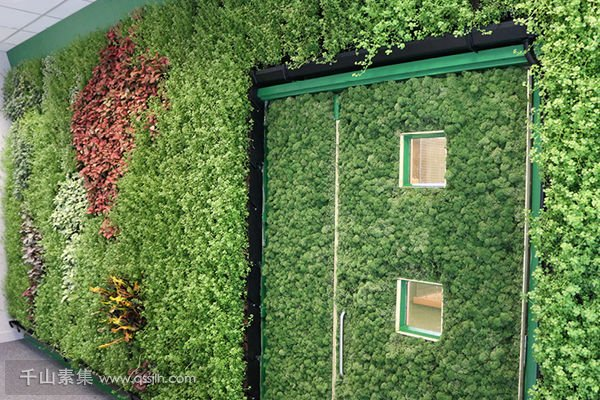 食品局办公室植物墙