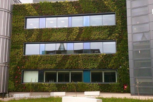 约克大学外墙植物墙