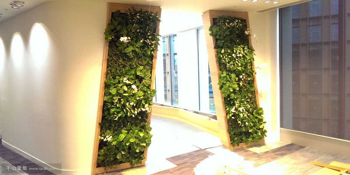 办公室入口植物墙