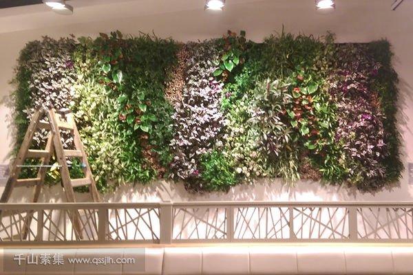 用餐区垂直绿化植物墙
