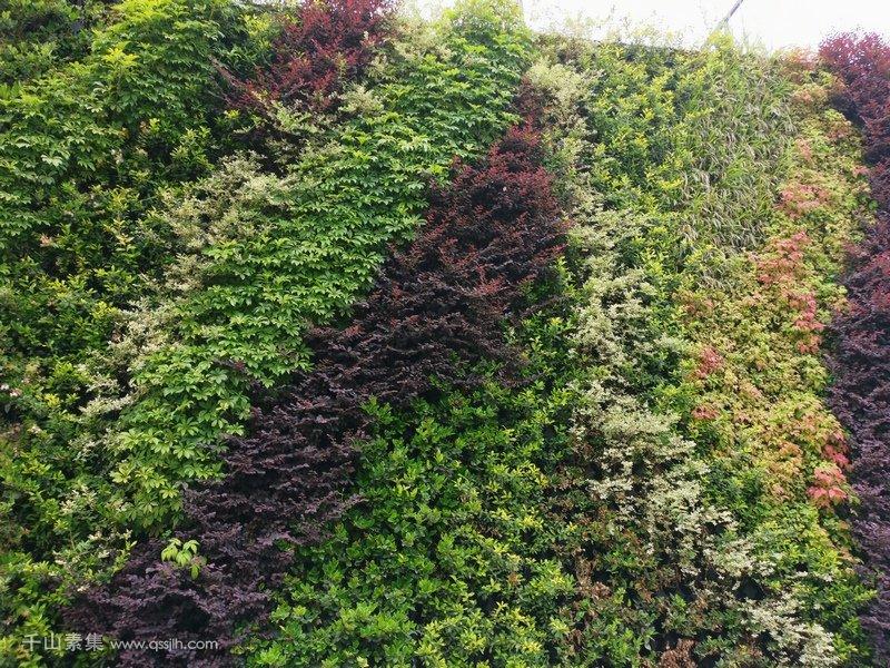 火车站广场植物墙