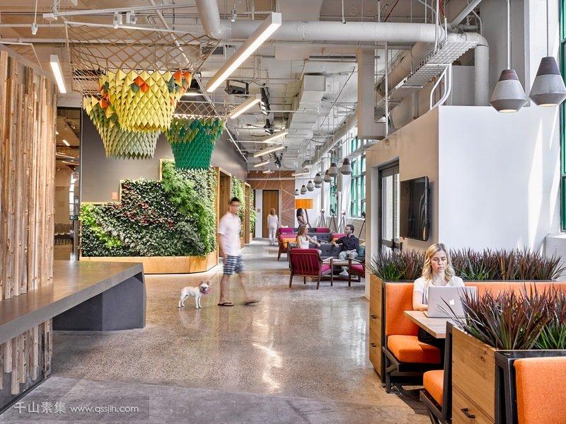 植物墙植物