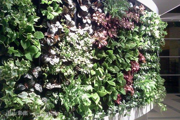 品牌展厅植物墙